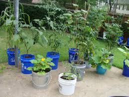 Lettuce Container Garden 5 Cost Effective Ways To Home Container Gardening U2013 Diy