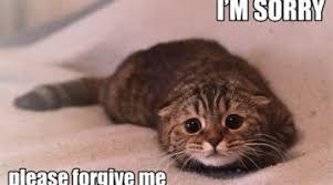 Random Cat Meme - random funny cat funny cat pictures videos news and articles