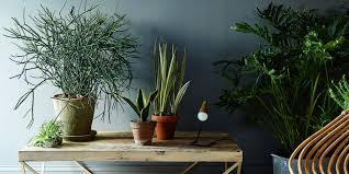 benefits of houseplants benefits of house plants creative land scape servicecreative
