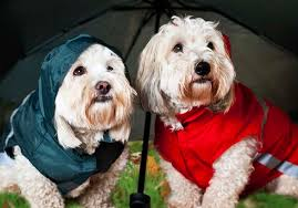 hurricane pet tips u0026 pet friendly shelters in central florida