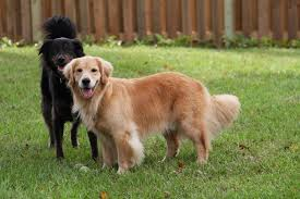 Dog In The Backyard by Barking Dog Fitness Doggie Daycare And Fitness Photos Barking
