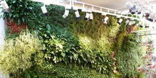 living walls biotecture