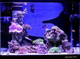 Reef Aquarium Lighting Clients Testimonials U2022 Orphek Aquarium Led Lighting