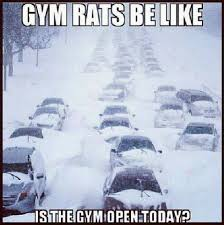 Gym Rats Meme - gym rats be like funny pictures quotes memes funny images