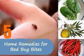 Remedy For Bed Bug Bites How To Get Rid Of Bed Bugs Best Bed Bugs Solutions At Home