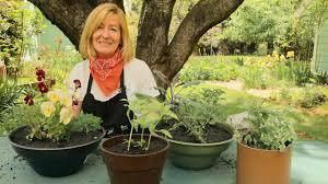 Herb Container Garden - herb container gardening with drip irrigation organic gardening blog