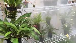 Homemade Outdoor Misting System by Diy Greenhouse Fogger System For Orchids Carnivorous Plants And