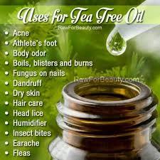 Tea Tree Oil Bathroom Cleaner Best 25 Tea Tree Oil Uses Ideas On Pinterest Tea Tree Oil Tea