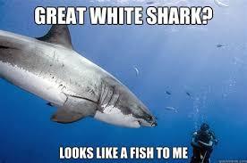 Funny Shark Meme - th id oip 1caui6gsmagvr p 9ulkcghae6