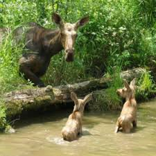 Minnesota wild animals images 36 best minnesota wildlife images minnesota jpg