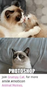 25 Best Memes About Grumpy - 25 best memes about cats grumpy cat and photoshop cats