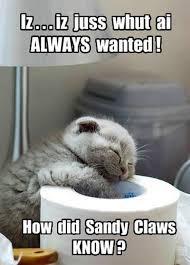 Funny Christmas Cat Memes - funny christmas cats gallery ebaum s world