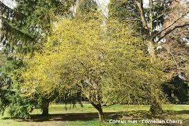beautify your backyard flowering trees u0026 shrubs wnep com