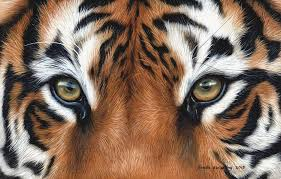 tiger painting by stribbling