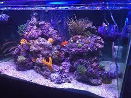Aquascaping Rocks 65 Gallon Aquascaping Reef2reef Saltwater And Reef Aquarium Forum