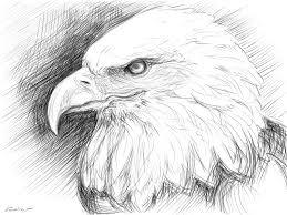 eaglesketch explore eaglesketch on deviantart