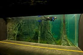 aquarium bureau aquarium bureau francedesign co