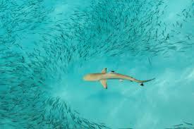 ocean u0027s daughter conservation alliance the mermaid tales blog