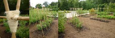 garden journal week of 8 1 thomas jefferson demonstration garden