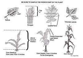 Parts Of A Tissue Plant Tissue Sampling Guidelines Regulatory Services Clemson
