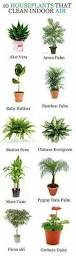 8 Houseplants That Can Survive by How To Keep Your Houseplants Green U0026 Gorgeous Houseplants