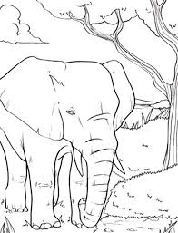 amazing animal african elephant coloring pages coloring sky