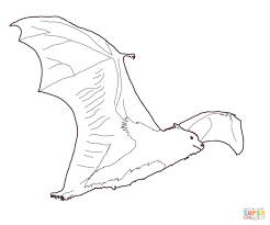 fruit bat coloring page free printable coloring pages