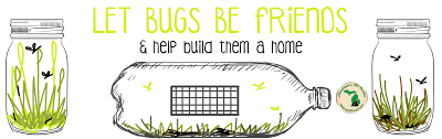 diy backyard bug catchers hamiltons rv blog