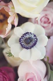 anemones flowers 75 best anemones images on flowers plants and anemones
