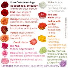 beige color meaning common rose color meanings for deepest red burgundy red red and