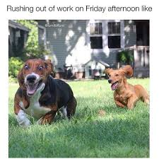 Weekend Dog Meme - when you cancel plans to stay in with your dog