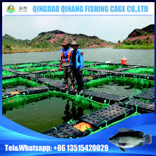 tilapia fish farming cage tilapia fish farming cage suppliers and
