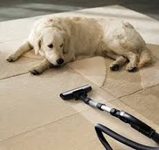 How To Remove Stain From Upholstery How To Remove Pet Stains On Carpet And Upholstery