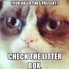 Grumpy Cat Meme Valentines Day - 101 best angry cat images on pinterest funny animals funny