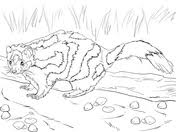 skunk coloring free printable coloring pages