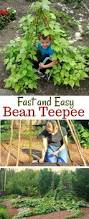 how to make a bean teepee one hundred dollars a month