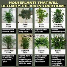 12 Best Plants That Can by Indoor Plants That Help Remove Indoor Air Pollution Diane U0027s