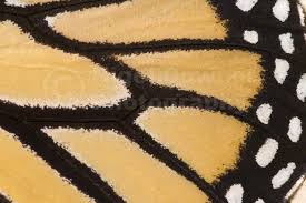 abstract pattern butterfly ab 0068 monarch butterfly wing pattern nigel downer photography
