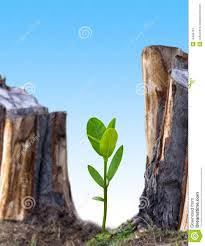 plant new tree stock images image 14495724
