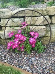 wagon wheel flowering winter plants pinterest wagon wheels