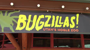 Zoo Lights Salt Lake City by Hogle Zoo Bugzillas June 2017 Youtube