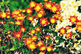 garden u0026 flower events 2015 melbourne u0026 vic melbourne