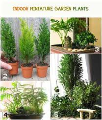 Tropical House Plants Names - best plants for miniature gardens resource guide empress of dirt
