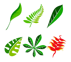 jungle leaf vector graphics free vectors u0026 graphics