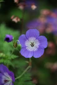 99 best garden images on pinterest garden plants flowering
