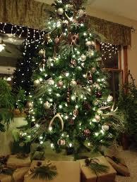 rustic christmas tree green how to grow a rustic christmas tree