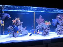 types of saltwater aquariums the aquarium setup filtration and