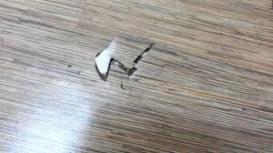 Laminate Flooring Singapore Tarkett A Floor Of Termites Installed By Evorich Holding Pte Ltd
