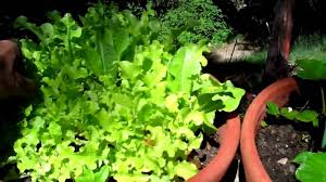 Indoor Gardening by Indoor Gardening Gardening How To Videos Youtube