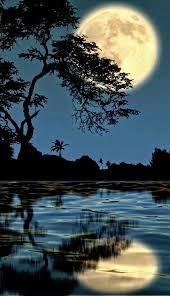 imagenes de amor con bellas palabras buenas noches amor las bellas palabras vida vivir amar gracias
